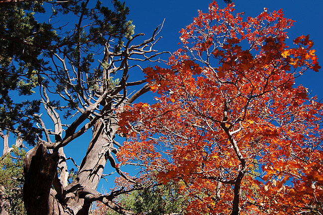 In autumn, McKittrick Canyon is a study in color.