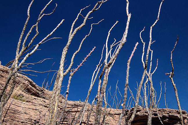 "Antenna-like stems decorate the Permian Reef ascent; this kind of scenery inspired naming this trip ""Sticks and Stones."""