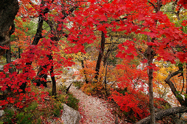 Autumn color decorates the Devil's Hall trail at Guadalupe Mountains National Park.