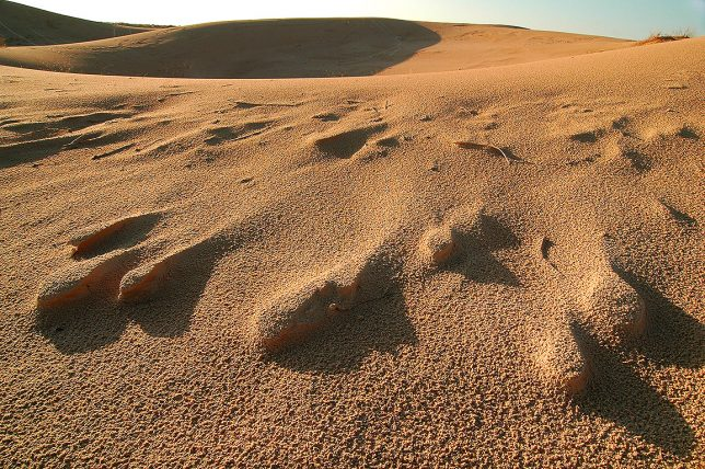Sand takes on unusual forms at Monahans Sandhills State Park.