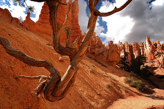 Queen's Garden trail, Bryce Canyon.