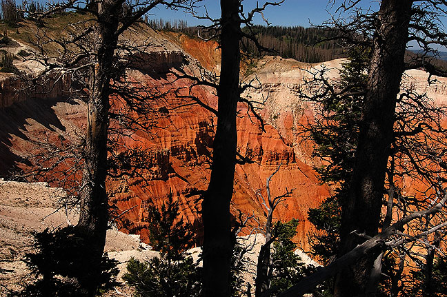 Cedar Breaks National Monument amphitheater viewed through Bristlecone Pines.