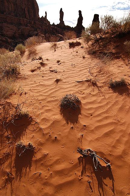 Dune field near Tower Arch, Klondike Bluffs, Arches National Park.
