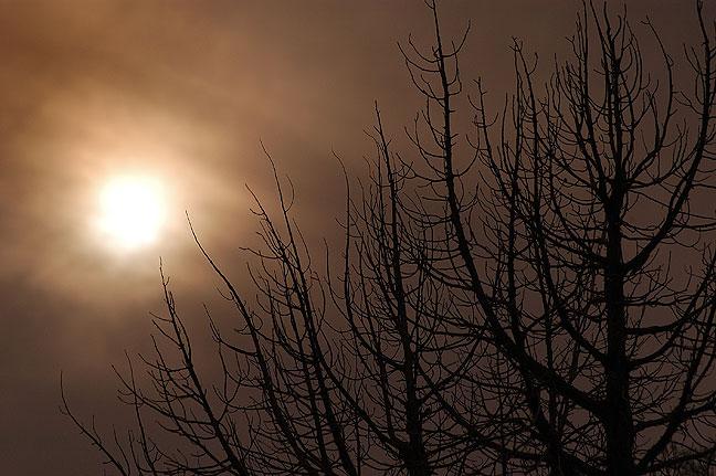 Trees and sun, Richardson Amphitheater.