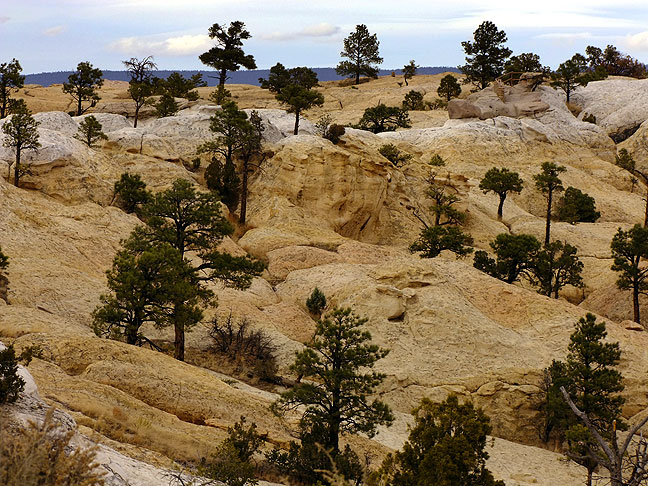 Trees and stone high on the bluffs of El Morro National Monument