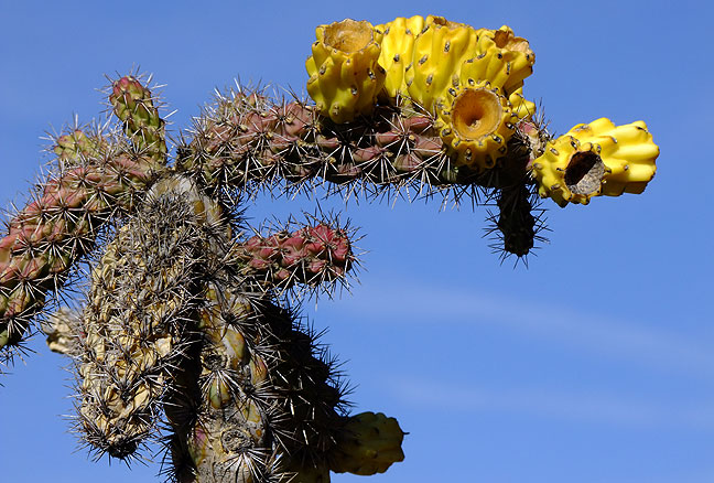 Flowering cactus outside the Gila Cliff Dwellings visitor center.