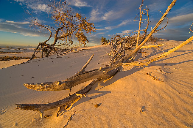 Branch and tree, sunset, White Sands.