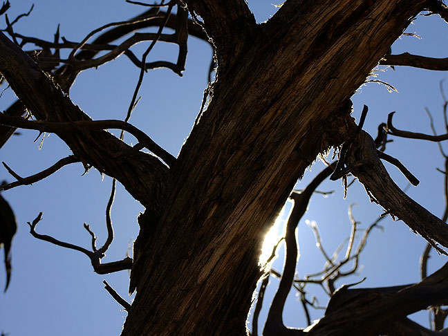 Sunshine on the dead tree, Delicate Arch trail.
