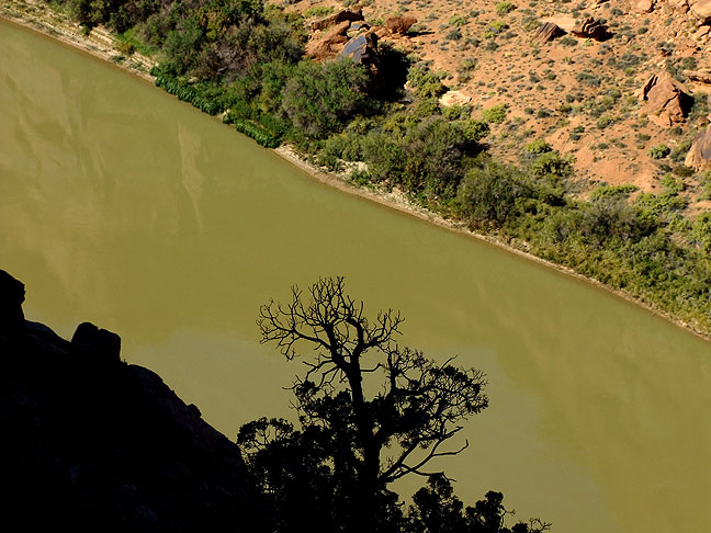 Tree and Colorado River, Porcupine Rim trail.