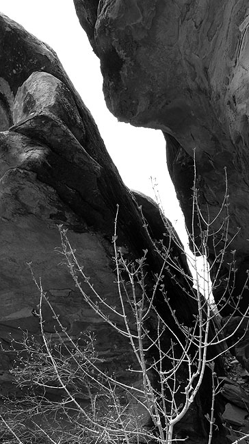 Crack and plant, Confluence trail head.