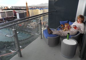 Abby reads the room service menu on our balcony as she and the dogs settle in to our 48th floor accommodations.