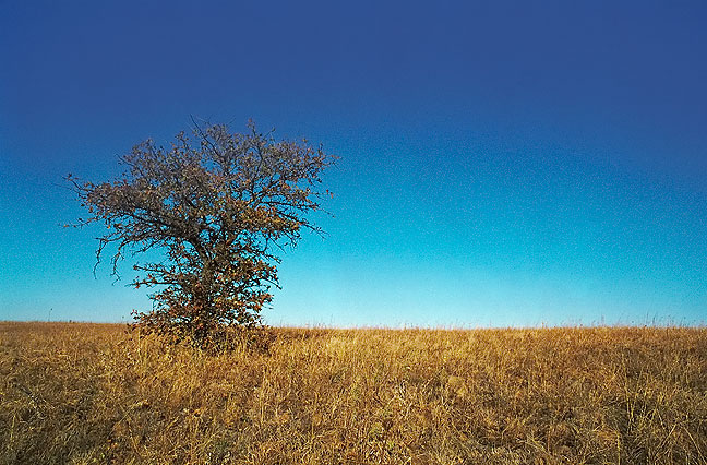 "The aptly-named ""One Tree Hill"" south of Charon Gardens, 1999."