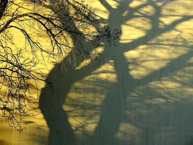 A tree casts long shadows on a wall early in the morning in Santa Fe.