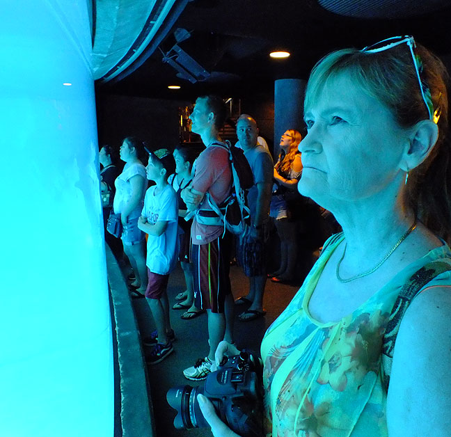 Abby watches for dolphins at the National Aquarium.