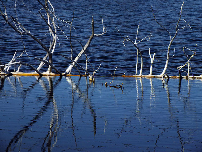 Dead trees create a flow barrier in the waters of French Lake.