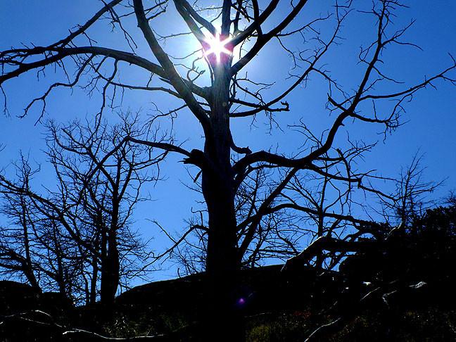Sunlight streams between branches of dead trees in the Glacier Rocks area.
