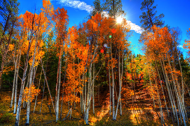 Aspens and high country sky shine is this three-frame hand-held HDR image made near Chromo, Colorado.