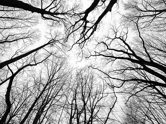This view looking straight up conveys the essence of the western Maryland woodlands.