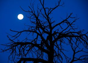 The moon sets behind a tree in southern Utah.