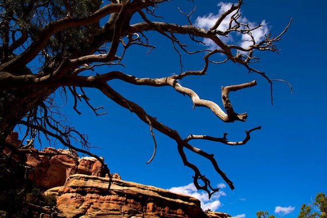 Moving north in Elephant Canyon toward the trail head, I photographed this dead tree against a perfect sky.