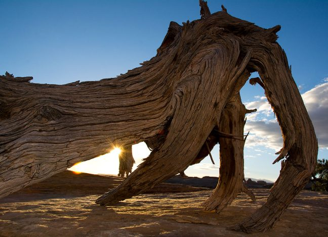 The rising sun peeks through a piece of dead wood on Canyonlands' Chesler Park Trail.