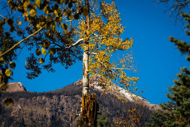 Aspens and mountains are set against the perfect blue sky near Treasure Falls.
