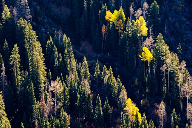 Trees cling to a hillside just outside of Pagosa Springs, Colorado.