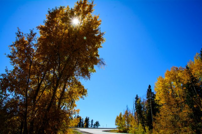 Sunlight bursts through a tree along U.S. 160 south of Wolf Creek Pass.