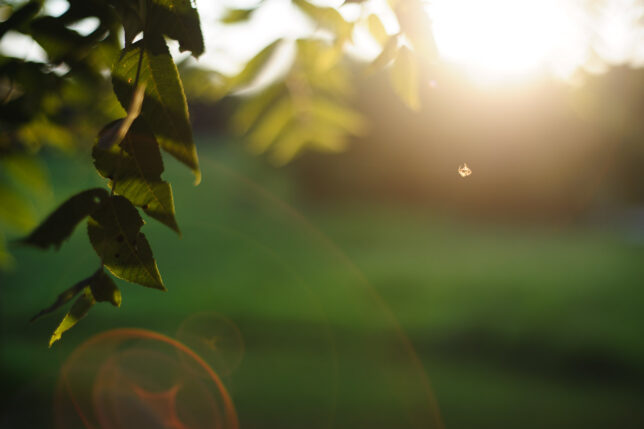 A very tiny spider floats in a sea of flare at sunset on our property recently. Shot with the 50mm f/1.8, images like this might be the one thing that this lens does right.