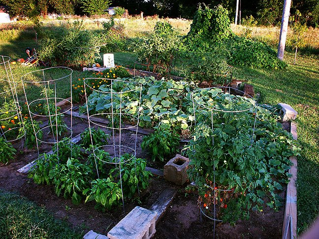The garden as see from the back yard. Peppers and cherry tomatoes are in the foreground. Behind them are cucumbers and tomatoes. In the distance is Morning Glory Mountain and the orchard.
