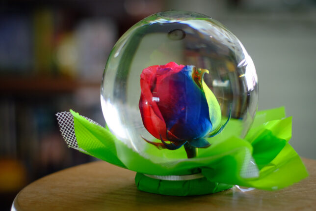 A rainbow rose is preserved inside a fluid-filled glass sphere. I bought this for Abby at a flower shop when I photographed their business for our newspaper's Readers Choice awards.