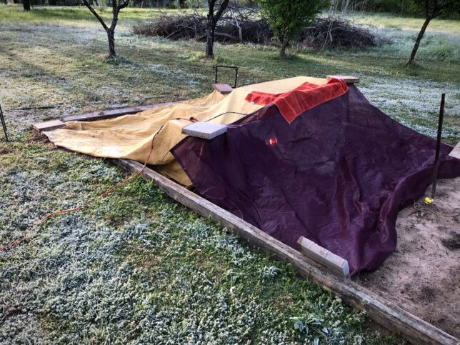 I addition to two large tarps and a couple of towels, I put a red heat lamp in the middle of the garden. It was a late-April frost, and a hard one.