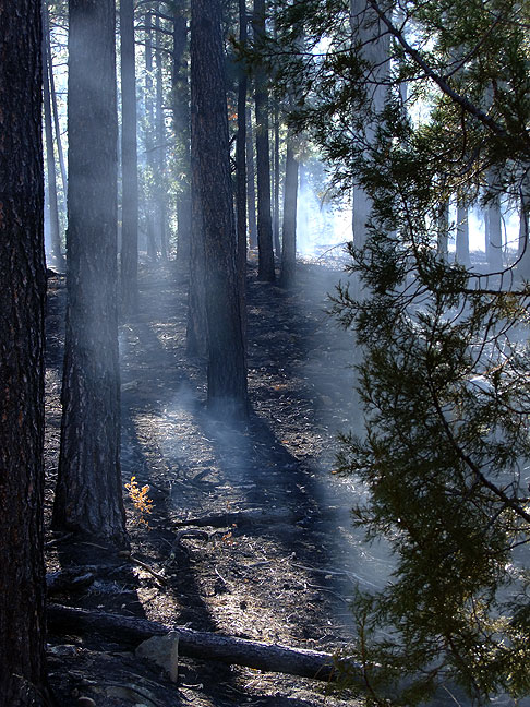 Blackened grass and backlit smoke, prescribed burn, Gila National Forest, New Mexico.