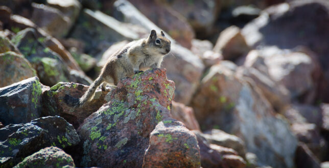 Ground squirrels also kept an eye on us as we climbed.