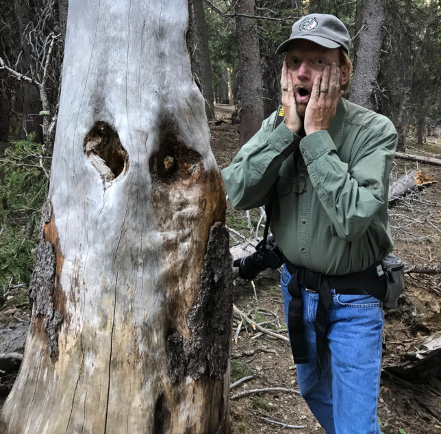 """I thought this tree looked a bit like Edvard Munch's """"The Scream."""""""